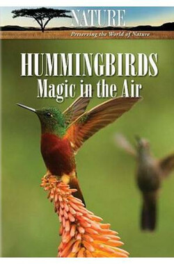 Hummingbirds: Magic in the Air (2010)