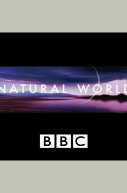 BBC 自然世界 2010 神秘的豹 BBC.Natural.World.2010.The.Secret.Leopards (2010)