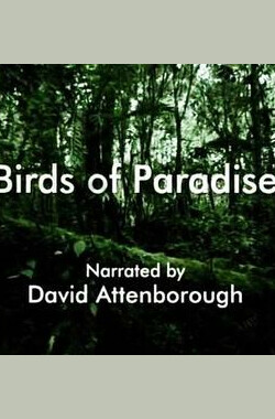 自然世界:天堂之鸟 Natural World: Birds of Paradise (2010)