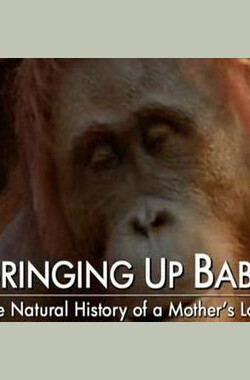 BBC 自然世界 2009 动物母性 BBC Natural World 2009 Bringing Up Baby (2009)