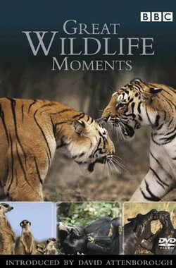 野生动物奇观 Great Wildlife Moments