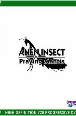 异形昆虫:螳螂 Alien Insect: Praying Mantis