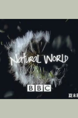 自然世界:蚂蚁帝国 Nature World: Empire of the Ants (2011)