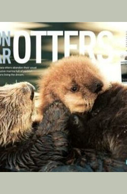 自然世界:海獭的百万宝宝 Sea Otters: A Million Dollar Baby (2010)