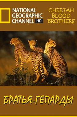 猎豹三兄弟 Cheetah Blood Brothers (2008)