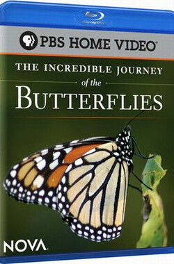 蝴蝶的神奇之旅 The Incredible Journey of the Butterflies (2009)