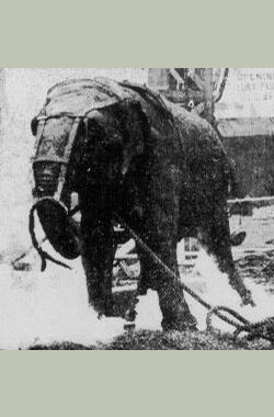 电击大象 Electrocuting an Elephant (1903)