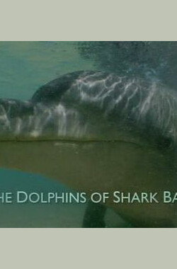 BBC自然世界:鲨鱼湾的海豚 BBC The Natural World: The Dolphins of Shark Bay (2010)